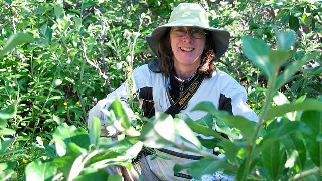 Quelles études pour être Botaniste ?